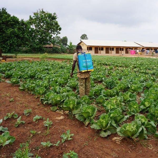 Farmer spraying crops.