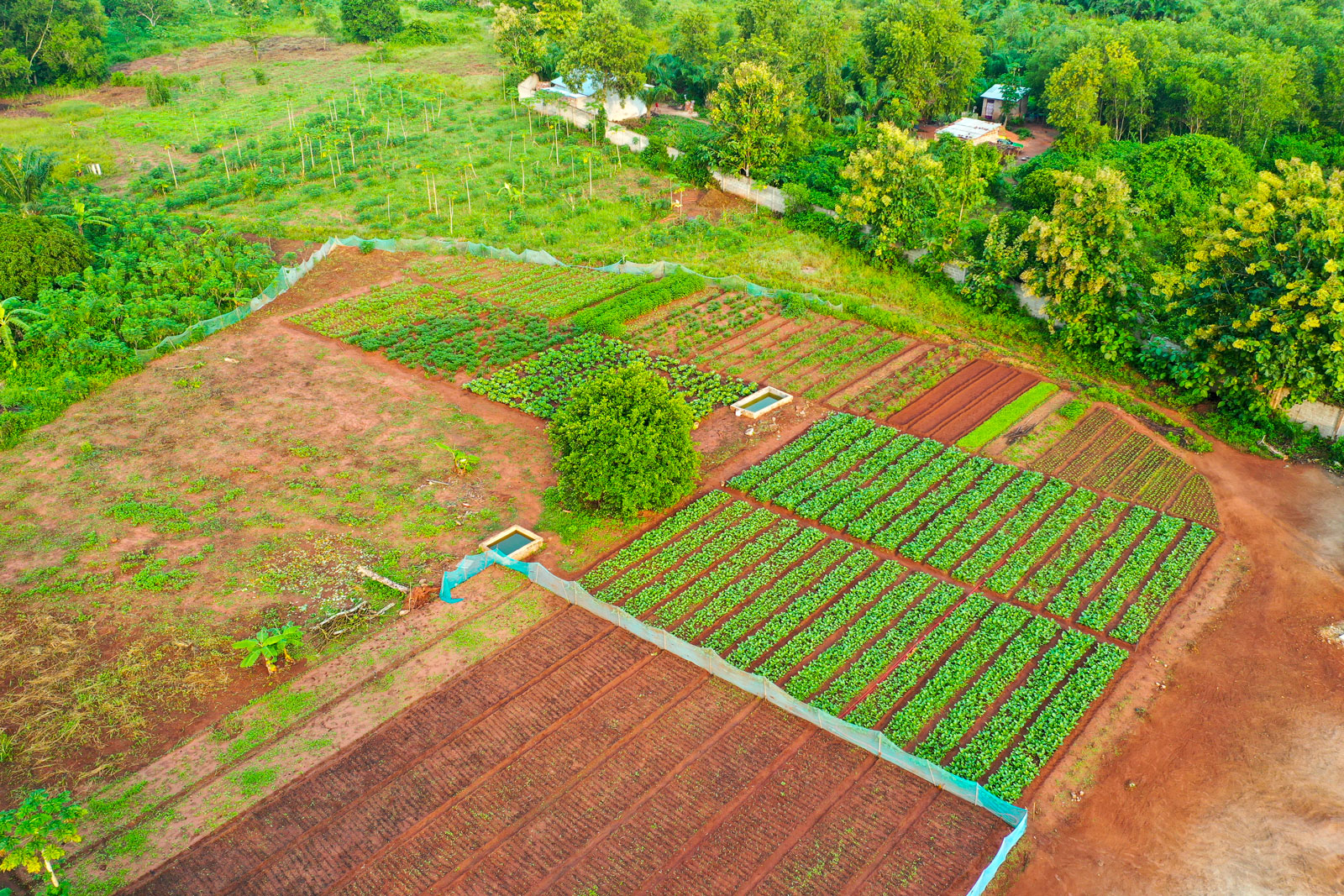 Crops shown from drone image.